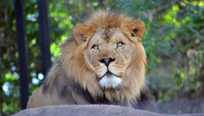 Bensons_ Adventures_Potter_Park_Zoo_Lansing